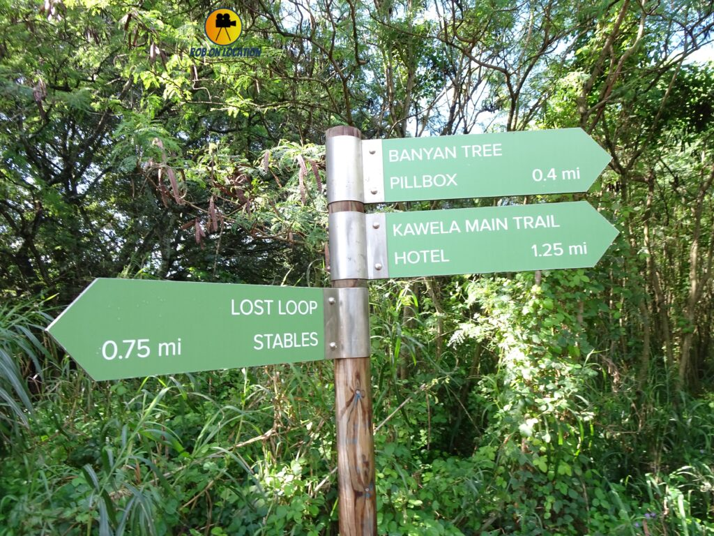 Turtle Bay paths