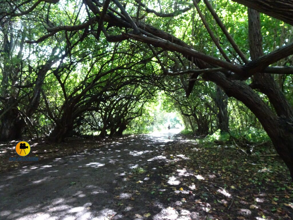 Turtle Bay paths