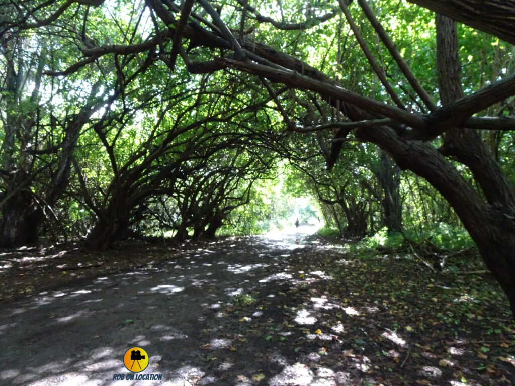 Banyan Trees - Mike and Dave Need Wedding Dates